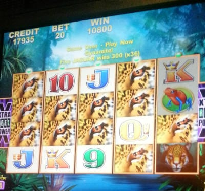 big hit on the jaguar mist slot betting only 20 cents